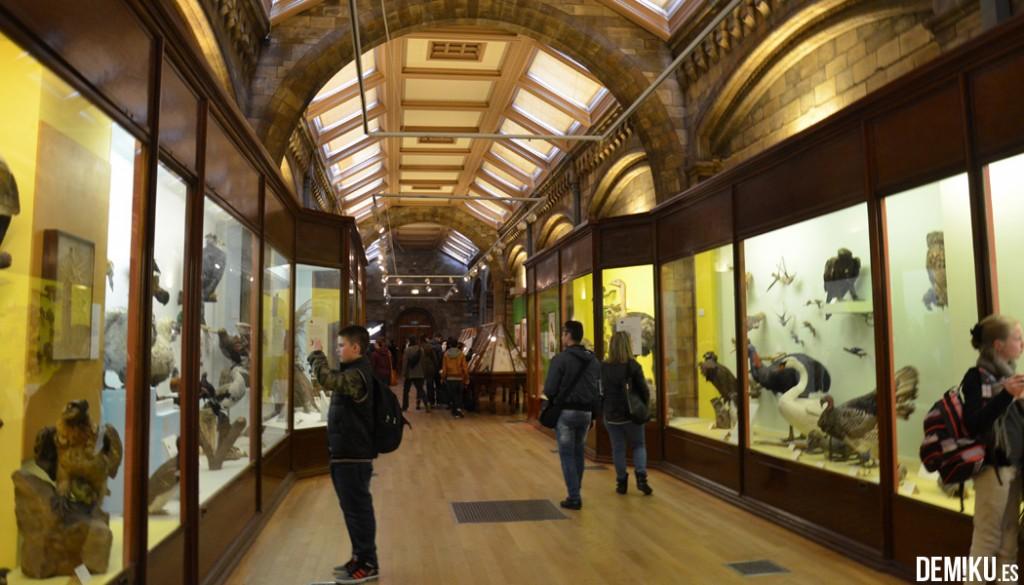 museo-historia-natural-Londres (5)