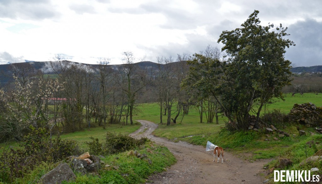 2-Turismo-Rural-Trives-Manzaneda-Pazo-Barbeiron-(38)