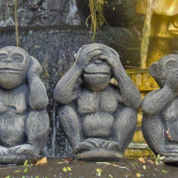 4-foto_monos-bangkok