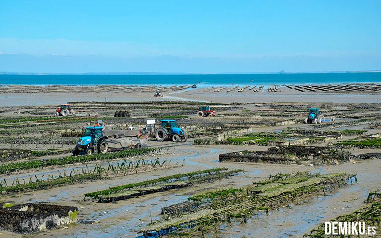 Campos de ostras Cancale
