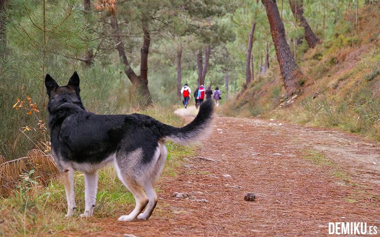 turismo-rural-,ascotas-senderismo
