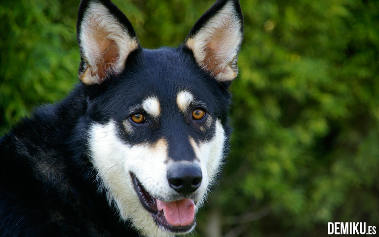 turismo-rural-mascotas-sasha