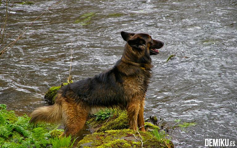 Turismo rural con perros