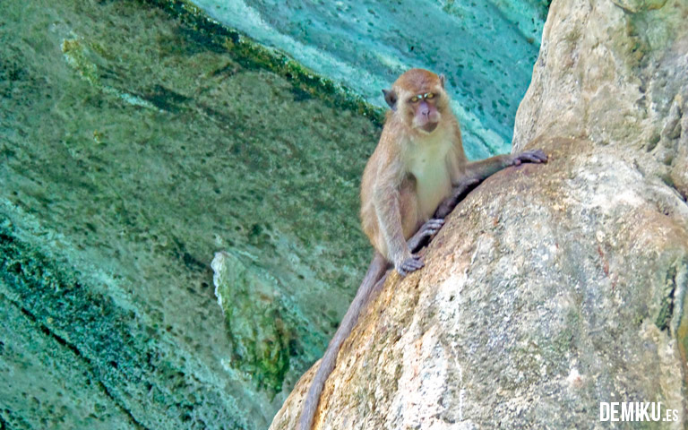 Monkey Beach 2